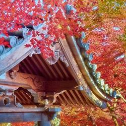 Sights and sounds of Japan: Old traditions in new contexts